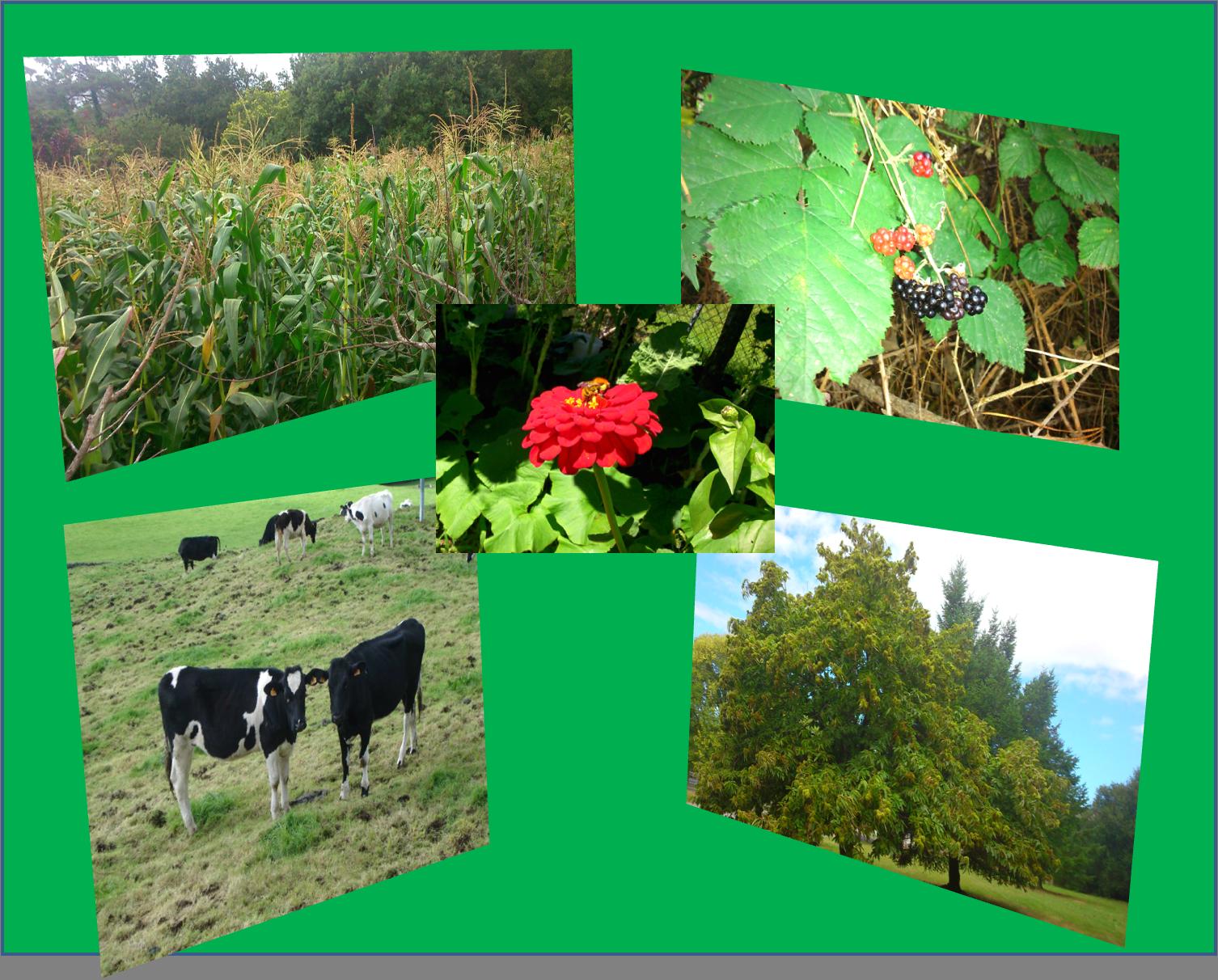 Frutos silvestres, cereales de cultivo ecológico.