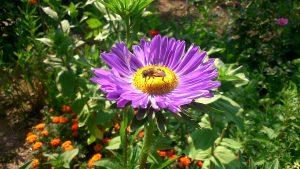 O uso inadecuado de biocidas provocou unha alta mortalidade nas abellas