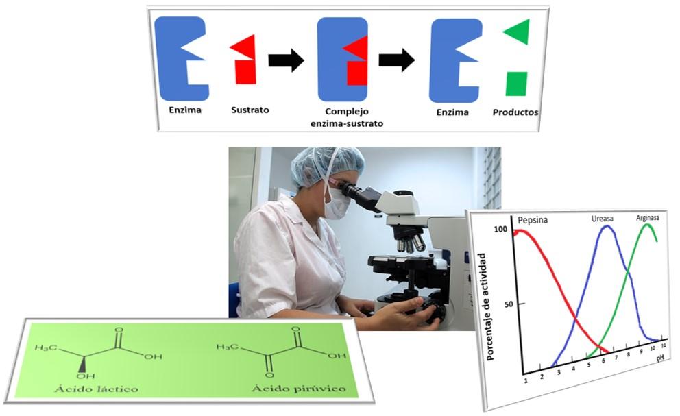 El análisis bioquímico como herramienta en el diagnóstico de enfermedades.